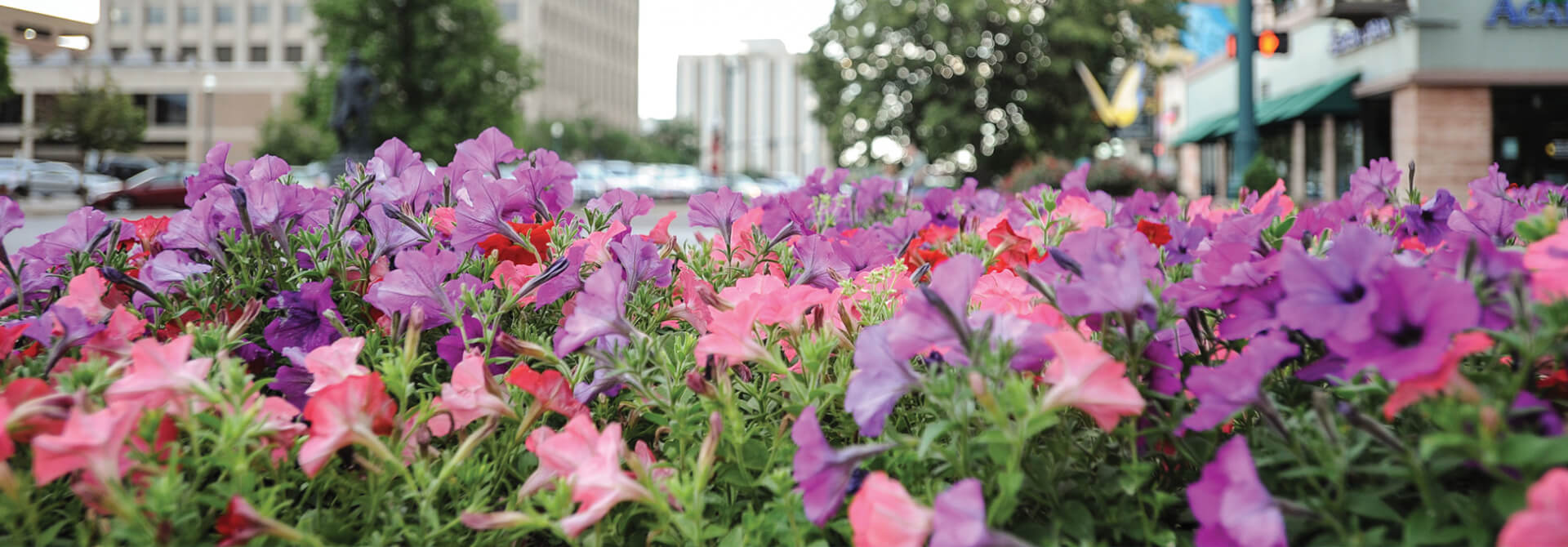 Downtown Header Flower Bed V2 Downtown Partnership Of Colorado Springs